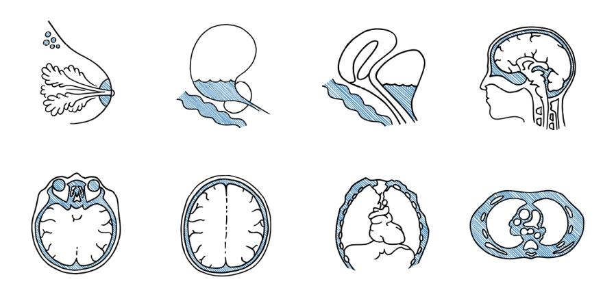 Custom Anatomical Drawings